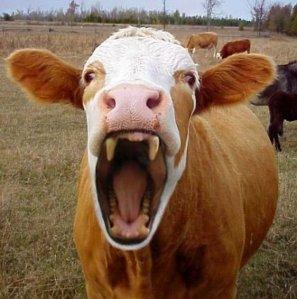 Даже корова смеется над магом-шарлатаном Николаевым!))